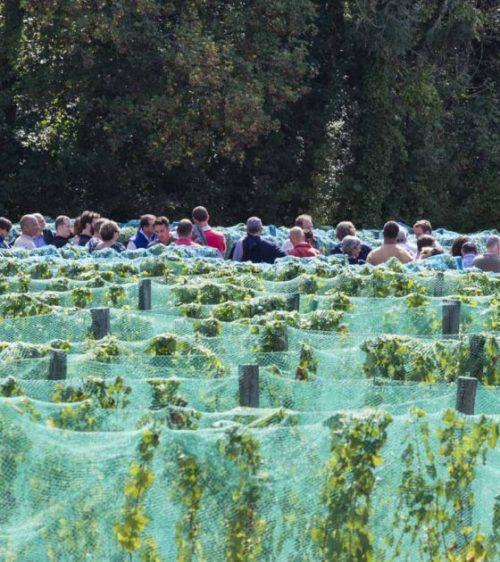 Vignes-Vigne-Envie-Guerard-2018