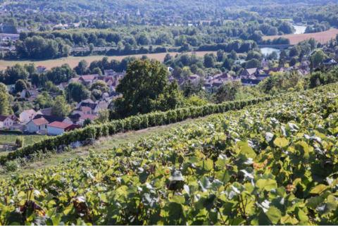 Les-Coteaux-de-la-Marne-Champagne-Bombart-Saacy-sur-Marne-01-07-18