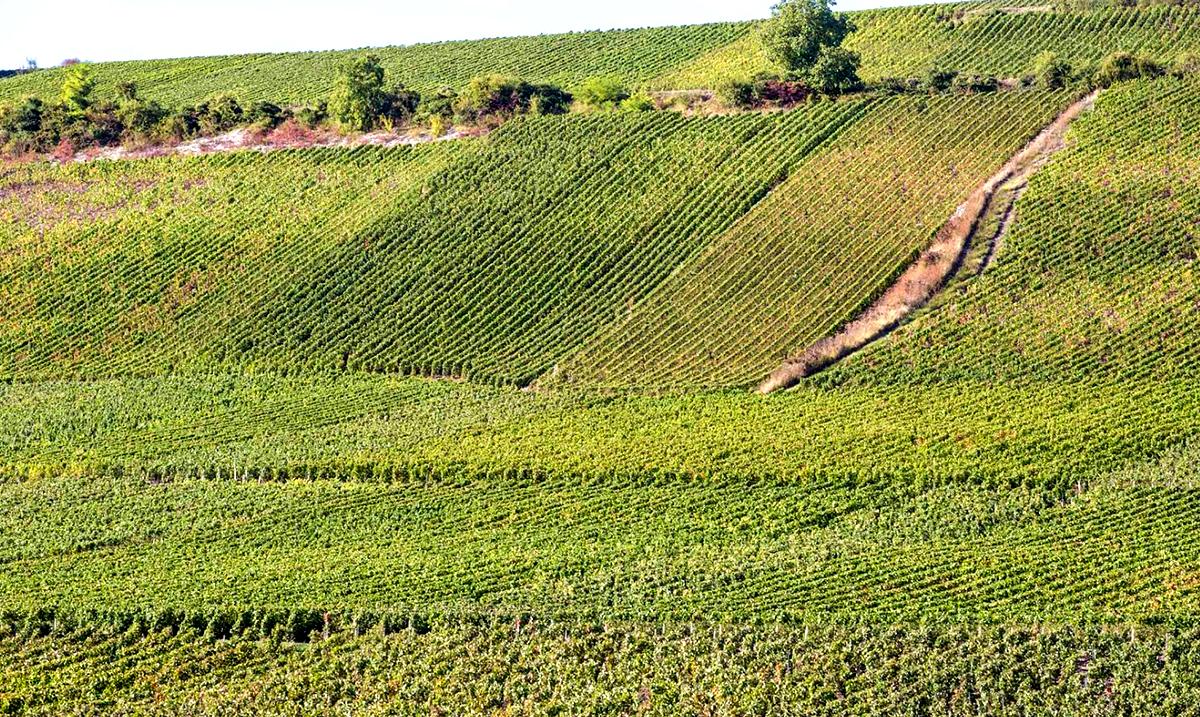 Crédits Photo : Coulommiers Pays de Brie Tourisme