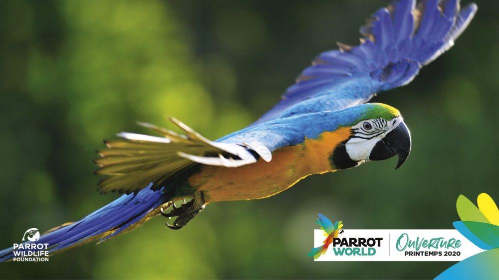 PARROT-WOLRD_Flying_Parrot