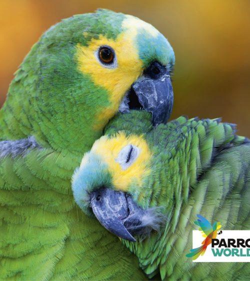 PARROT-WOLRD_Parrots