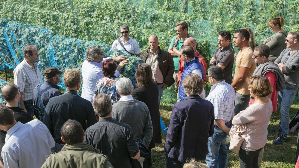 Visite-groupe-Vigne-Envie-Guerard-2018