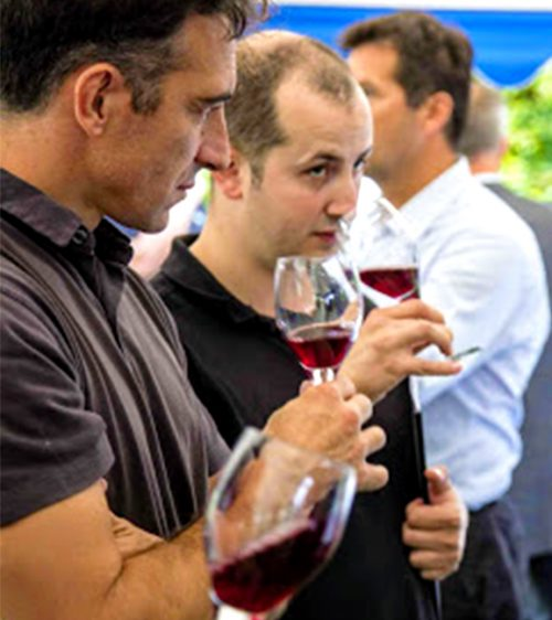 Vigne dégustation V2